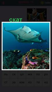 около рифа под водой плавает скат