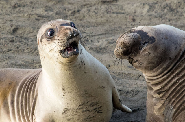 """Highly Commended Wildlife Comedy Photo Competition by George Cathcart dengan judul """"WTF"""""""