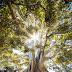 दानी पेड़ का प्यार moral story in hindi for kids