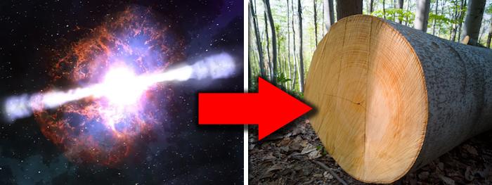 aneis de troncos de arvores podem revelar explosões de supernovas