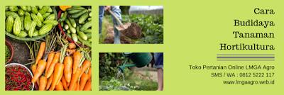 bayam maestro, manfaat bayam, cara menanam bayam, jual benih panah merah, toko pertanian, online, lmga agro