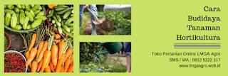 cara menanam cabe di polybag, cabe keriting or victoria, benih oriental seed, cara menanam cabe, jual benih cabe, toko pertanian, toko online, lmga agro
