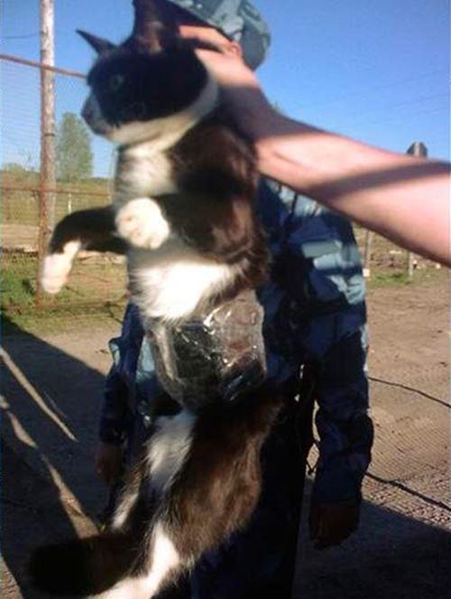 kucing-ditangkap-seludup-handphone-ke-penjara