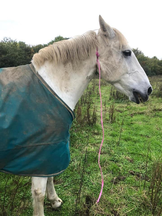Full-size photograph of the horse found with baling twine around its neck Image taken from Facebook post