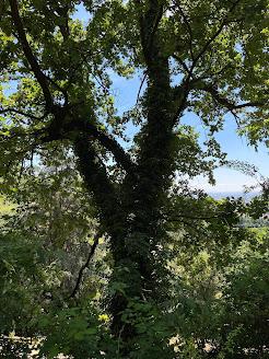 Summer Ivy - Bergamo -Via Colle dei Roccoli.