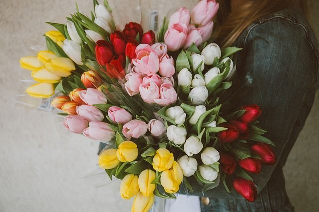 Colorful Tulip Facts
