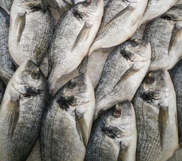 """Alt: = """"pile of fish"""""""