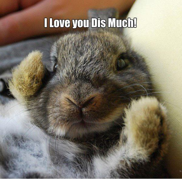 Funny Pictures: I love you dis Much