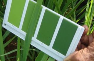 cara pemupukan padi sawah yang benar, pemupukan berimbang pada tanaman padi, jenis pupuk padi, pemupukan padi saat bunting, cara memupuk tanaman padi yang benar, cara pemupukan padi, dosis pupuk padi sawah per hektar
