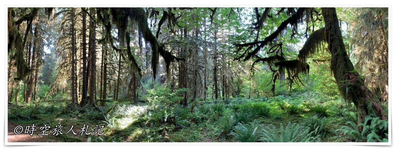 奧林匹克國家公園Olympic National Park 3日遊 Day 1: 溫帶雨林區Quinault Rain Forest、Hoh Rain forest