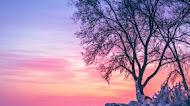 winter sunset mobile wallpaper