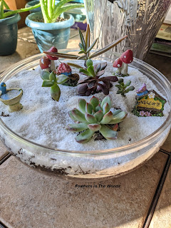 tutorial to plant a small indoor succulent bowl