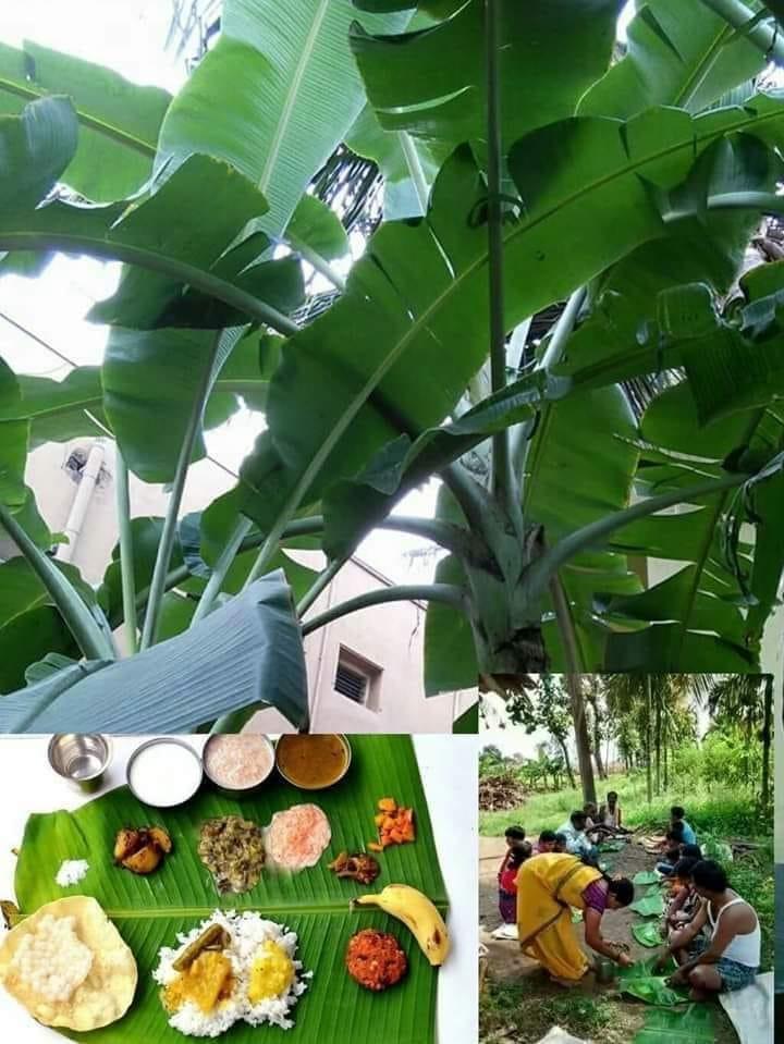 Banana Leaf foods