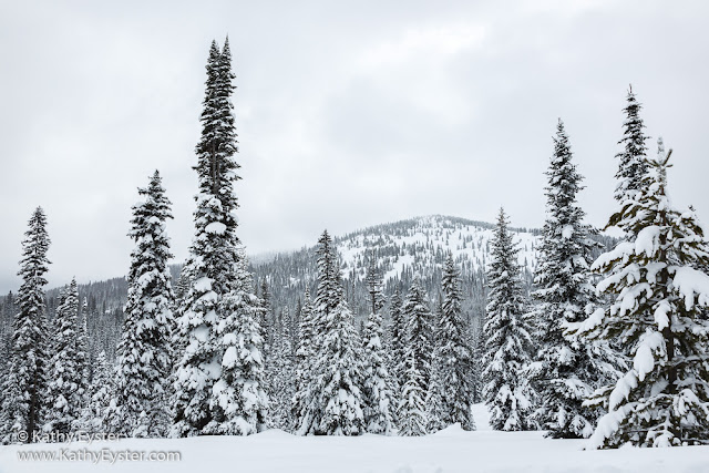 Snow-covered pines in the mountains