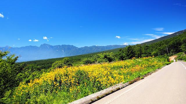 野辺山から清里周辺を巡り明野のひまわり畑へ。下り中心の真夏の避暑サイクリングコース。平沢峠、美し山、清里テラス、まきば公園、清泉寮、明野サンフラワーフェスと見どころいっぱい!