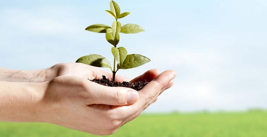Contoh Makalah Lingkungan Hidup Abdurrazak Hasan