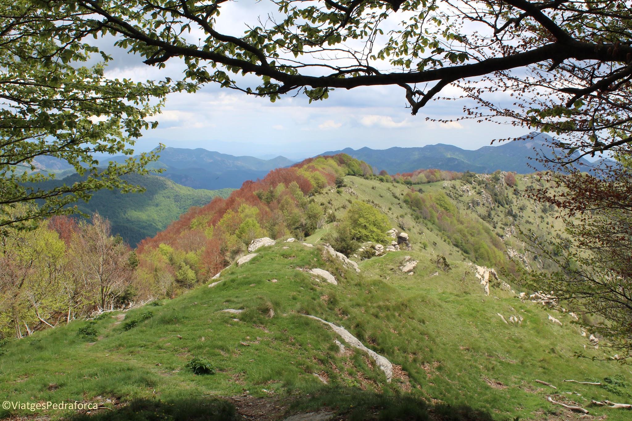 Puig de les Bruixes, natura, ruta senderista, Alta Garrotxa, Montagut i Oix, Girona, Catalunya