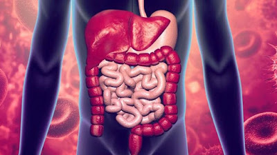Infograma aparato digestivo