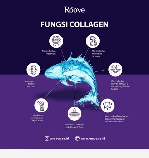 Fungsi kolagen apa