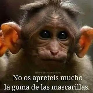 Mono con las orejas muy separadas