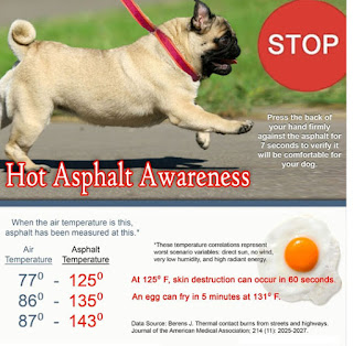https://www.adoptapet.com/blog/protecting-paws-from-hot-pavement/