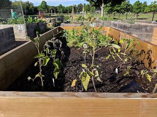 Community Garden Meeting - April 1