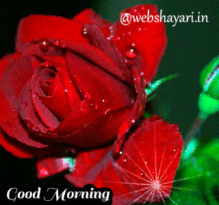 morning gif download images