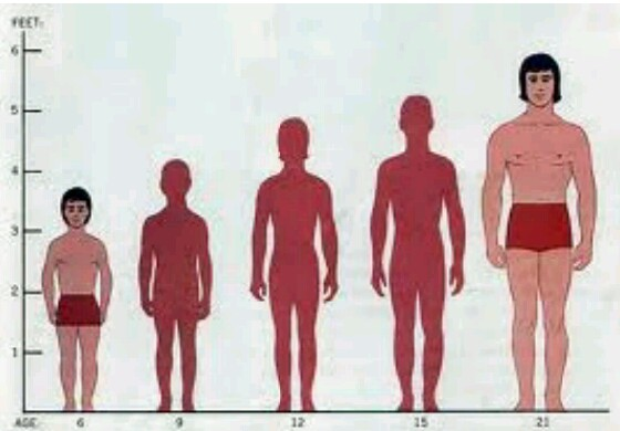 How can height increase,