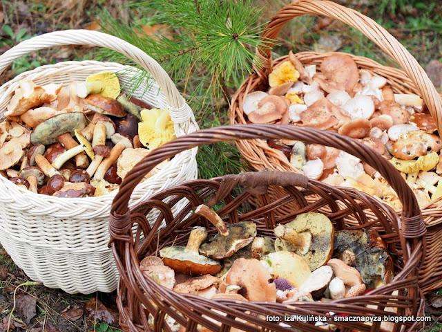 grzybobranie, na grzyby,m las, mazowsze, mazowiecki las, lasy na mazowszu, wycieczka do lasu, kosz grzybow, koszyki, pozysk