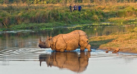 Best Time to Visit Nepal -- one-horned rhinoceros