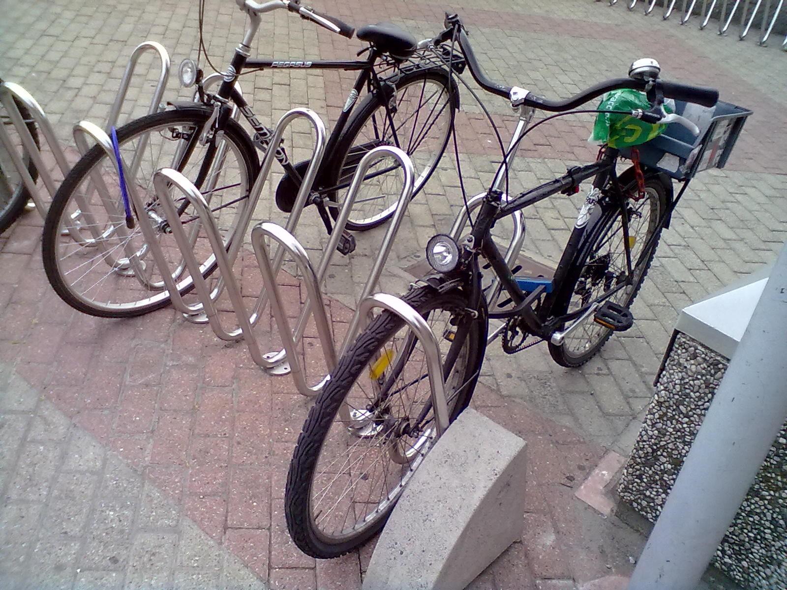 Le Radici Degli Alberi Mi Serve Una Bici Per Andare Al Lavoro Per