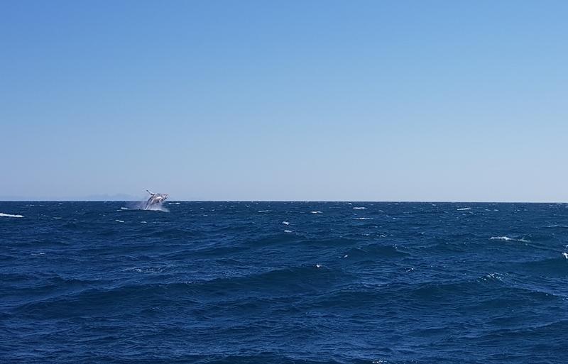 Preços, dias, horários e valores do passeio das Baleias em Vitória
