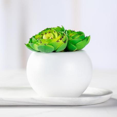 Artificial Mini Succulent & Cactus Plants
