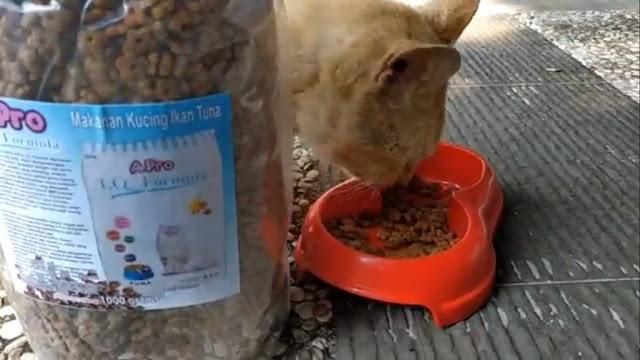 A Pro IQ Formula Cat Food untuk Si Meong
