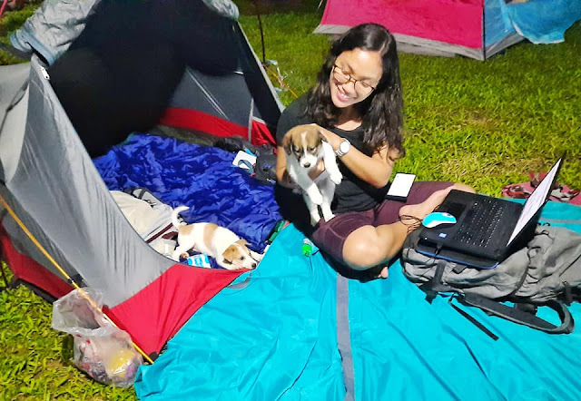 girl camper working from tent while camping with two little cute dogs