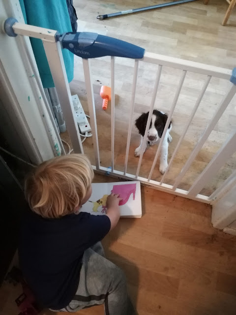 tiny spaniel puppy behind a stairgate