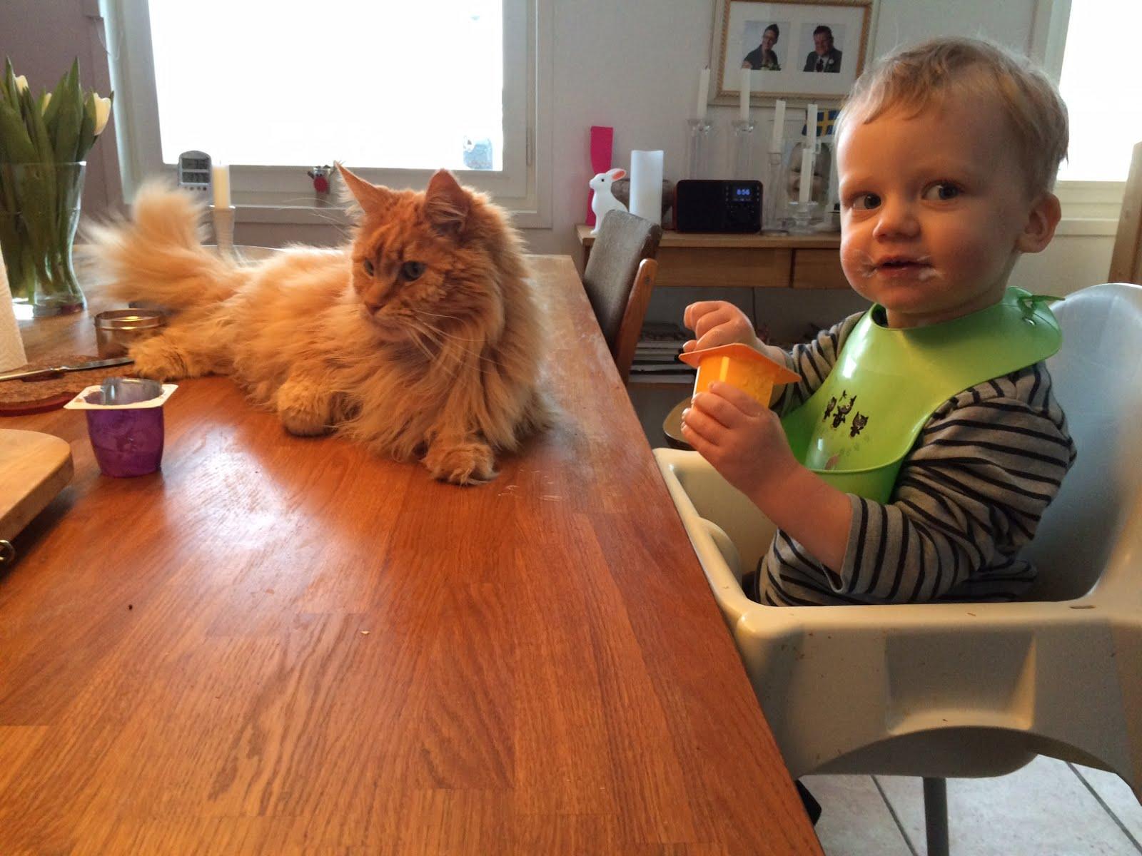 Zammy och sonen delar frukost 3