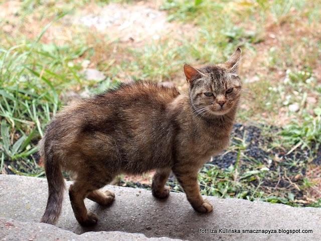 podlasie, urlop, koty, kot, moje wakacje na Podlasiu, karmimy bezpańskie koty, kocie sieroty, nie lubię kotów