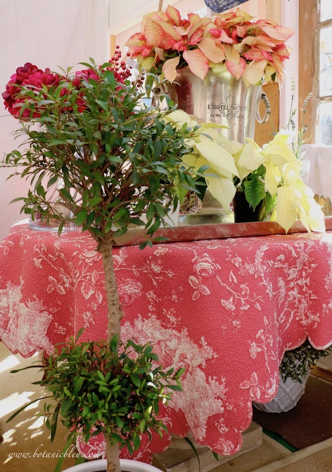 A red and white quilted toile throw gives the greenhouse true French Country Christmas flair