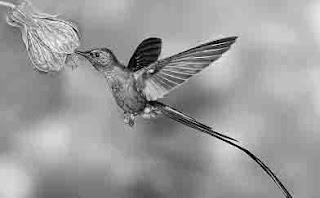 Penyerbukan dengan bantuan burung