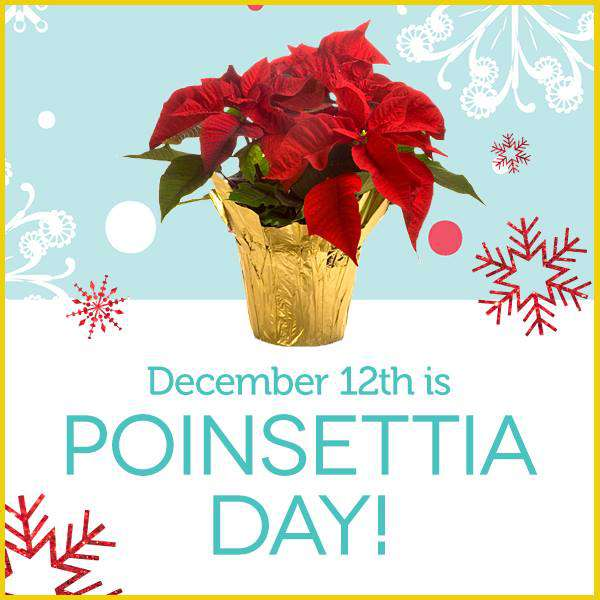 National Poinsettia Day Wishes Images