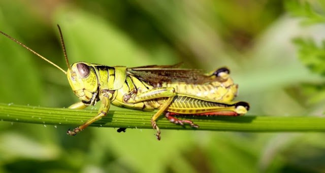 The decline of insect populations over the last decade has been largely underestimated