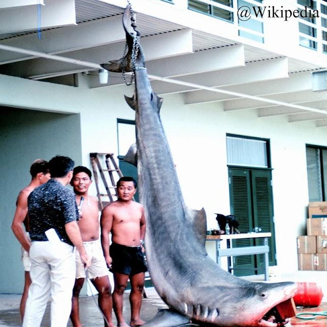 Penangkapan Ikan Hiu oleh Nelayan