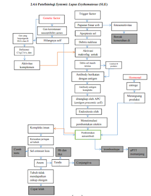 Patofisiologi Systemic Lupus Erythematosus :