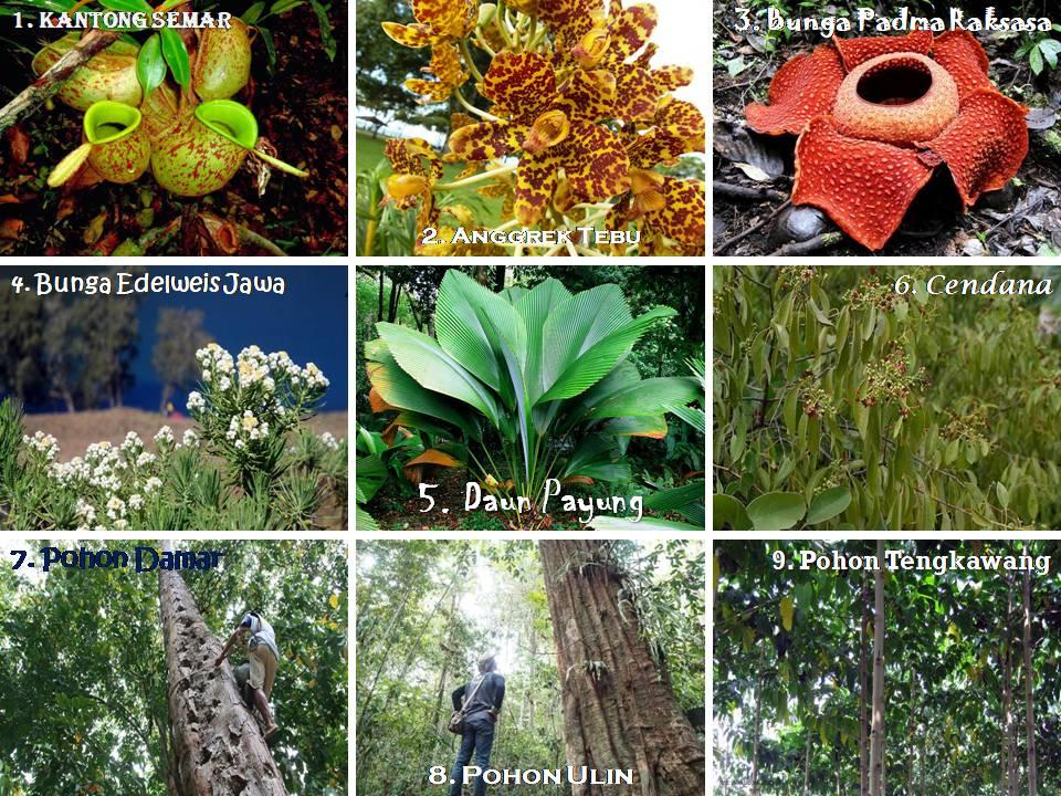 80 Koleksi Gambar Hewan Dan Tumbuhan Yang Hampir Punah Gratis Terbaru