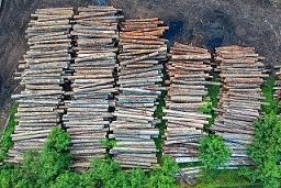 Deforestation effects