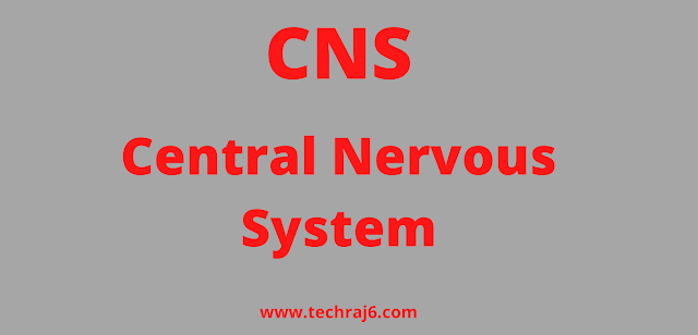 CNS full form, What is the full form of CNS