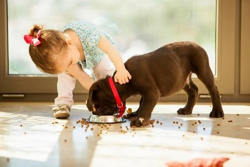 Wakacyjna dieta psa