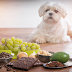 08 Dangerous Foods You Should Never Feed Your Dog, Dogs Care Guide