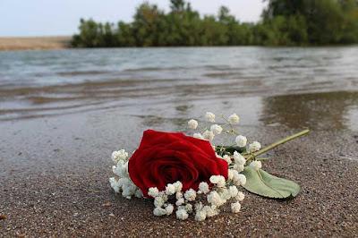 صور بحر مع وردة حمراء